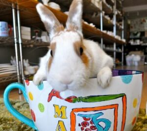 Bunny sitting in a giant mug